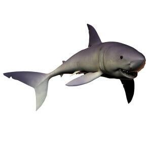 Imagen del tiburon mako