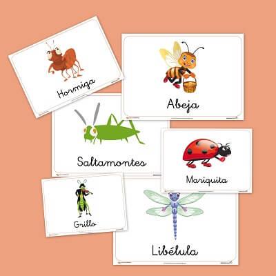 Fichas de animales : los insectos