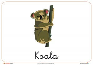 Fichas de Animales Salvajes: Koala