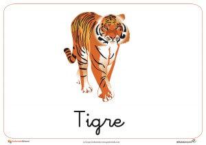 Fichas de Animales Salvajes: Tigre