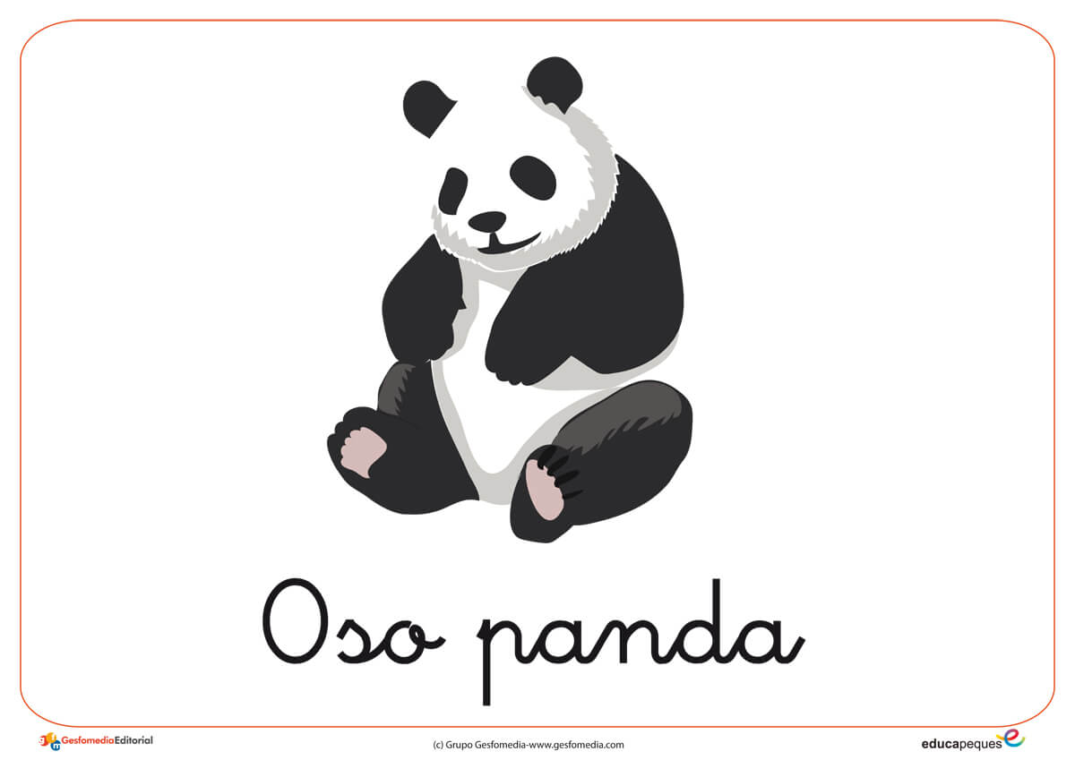 Fichas de Animales Salvajes: Oso panda