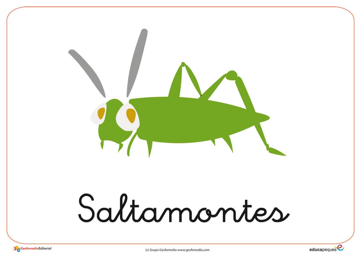 Fichas de animales e insectos: Saltamontes