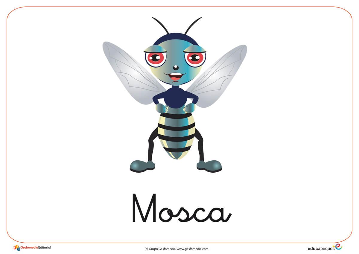 Fichas de animales e insectos: Mosca