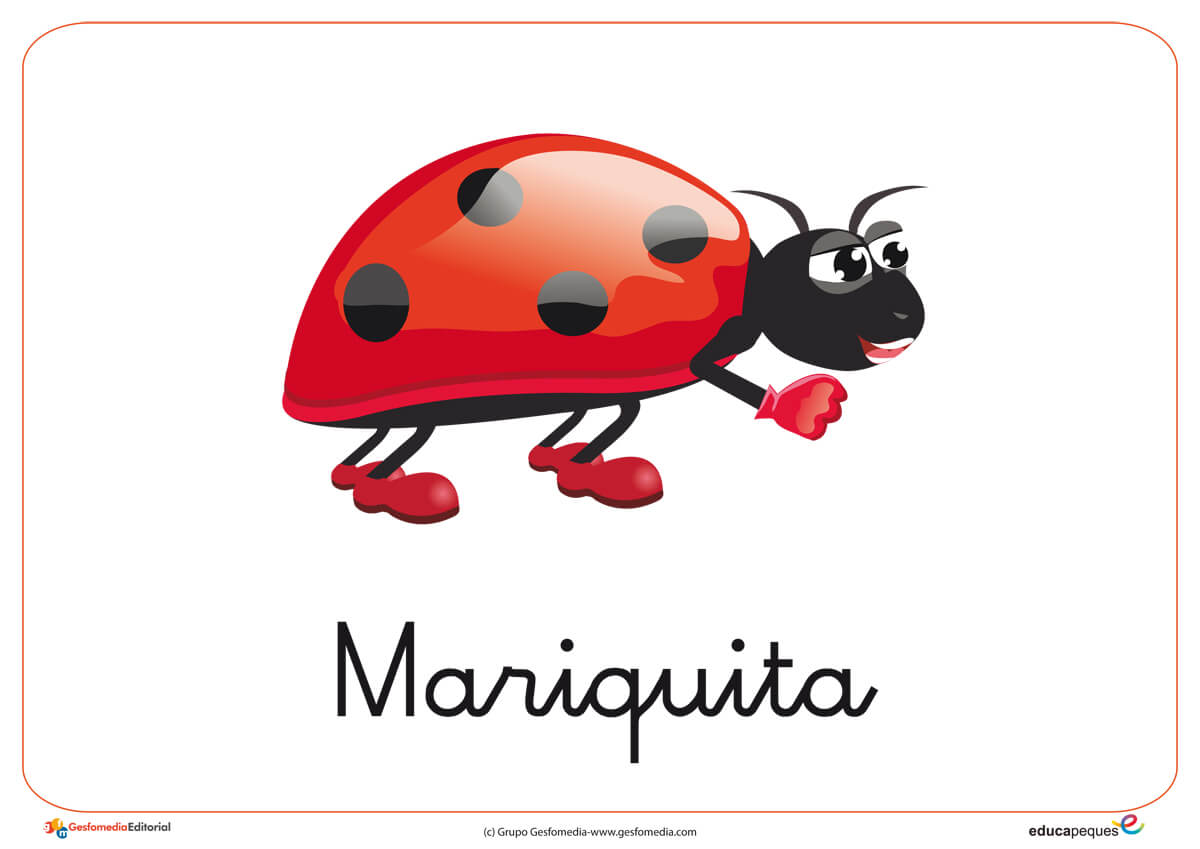 Fichas de animales e insectos: Mariquita