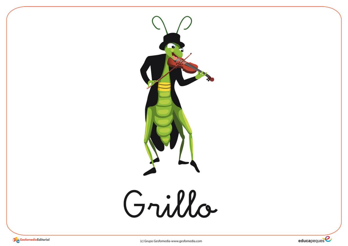 Fichas de animales e insectos: Grillo