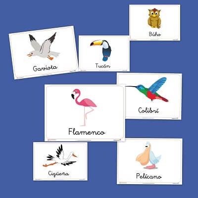 aves jpg