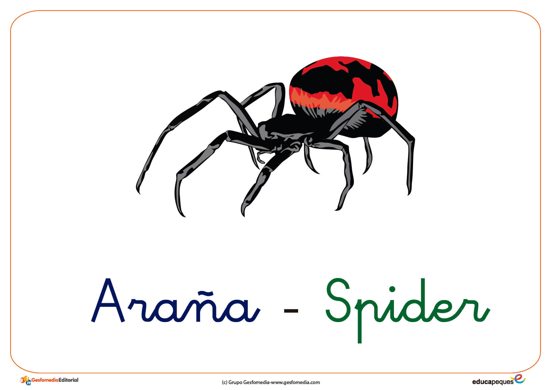 Los Insectos Vocabulario En Imágenes