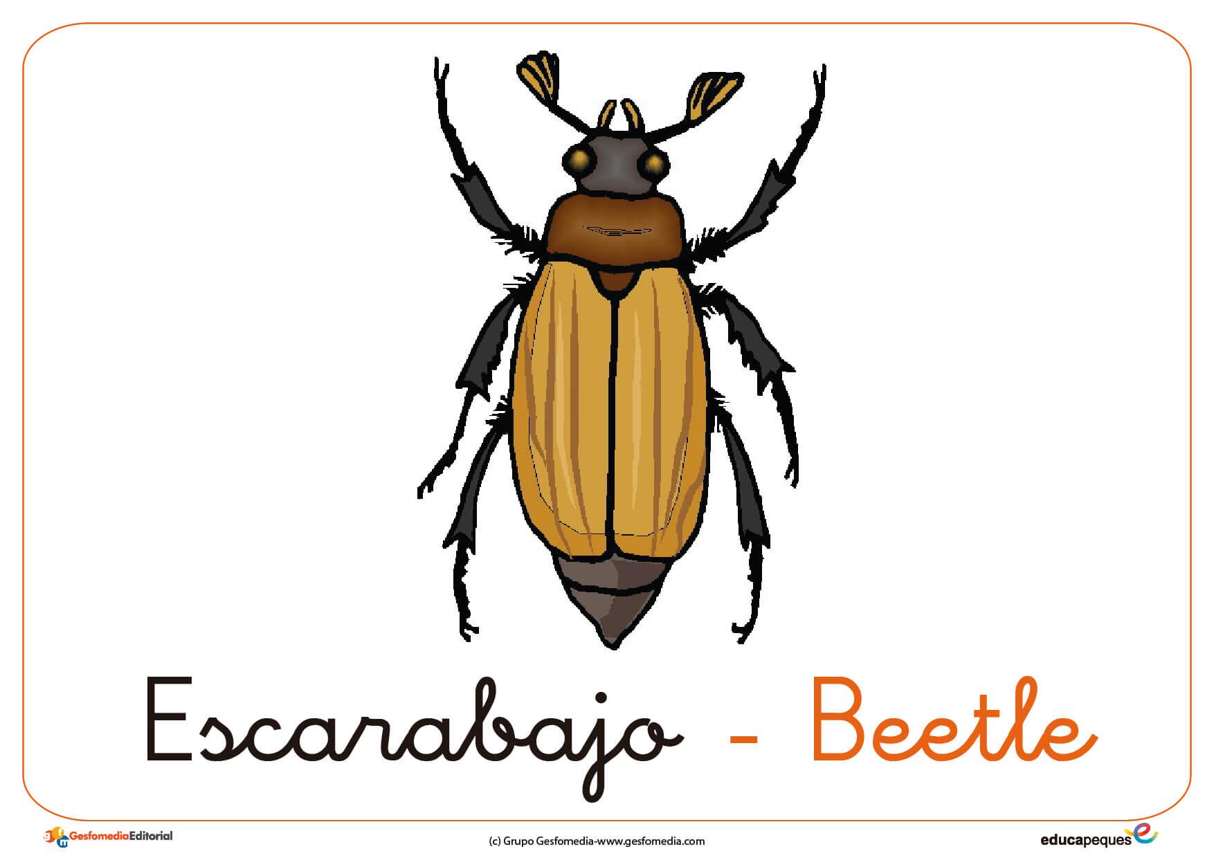 escarabajo ficha insectos