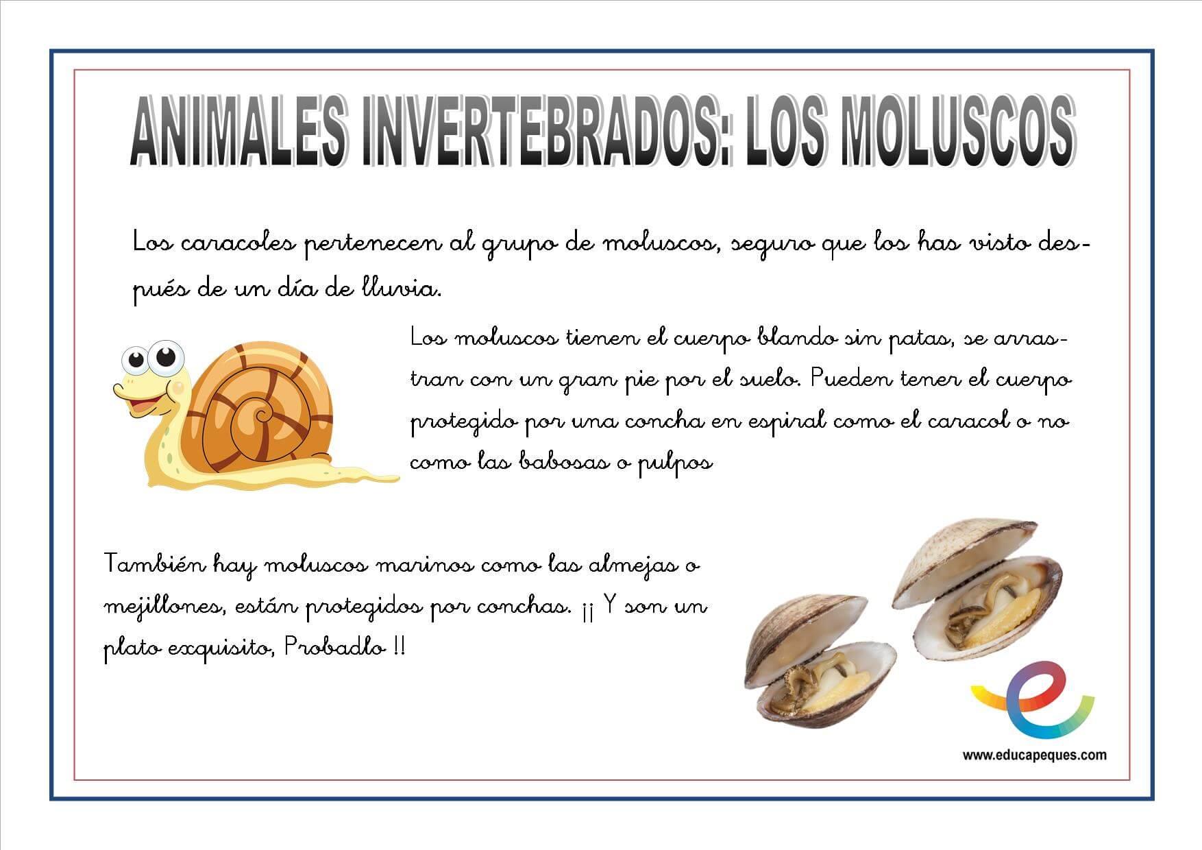 Animales invertebrados fichas ciencias naturales for Cuarto definicion