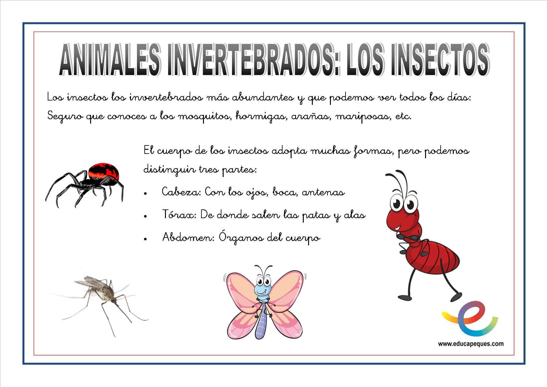 Animales Invertebrados. Fichas ciencias naturales