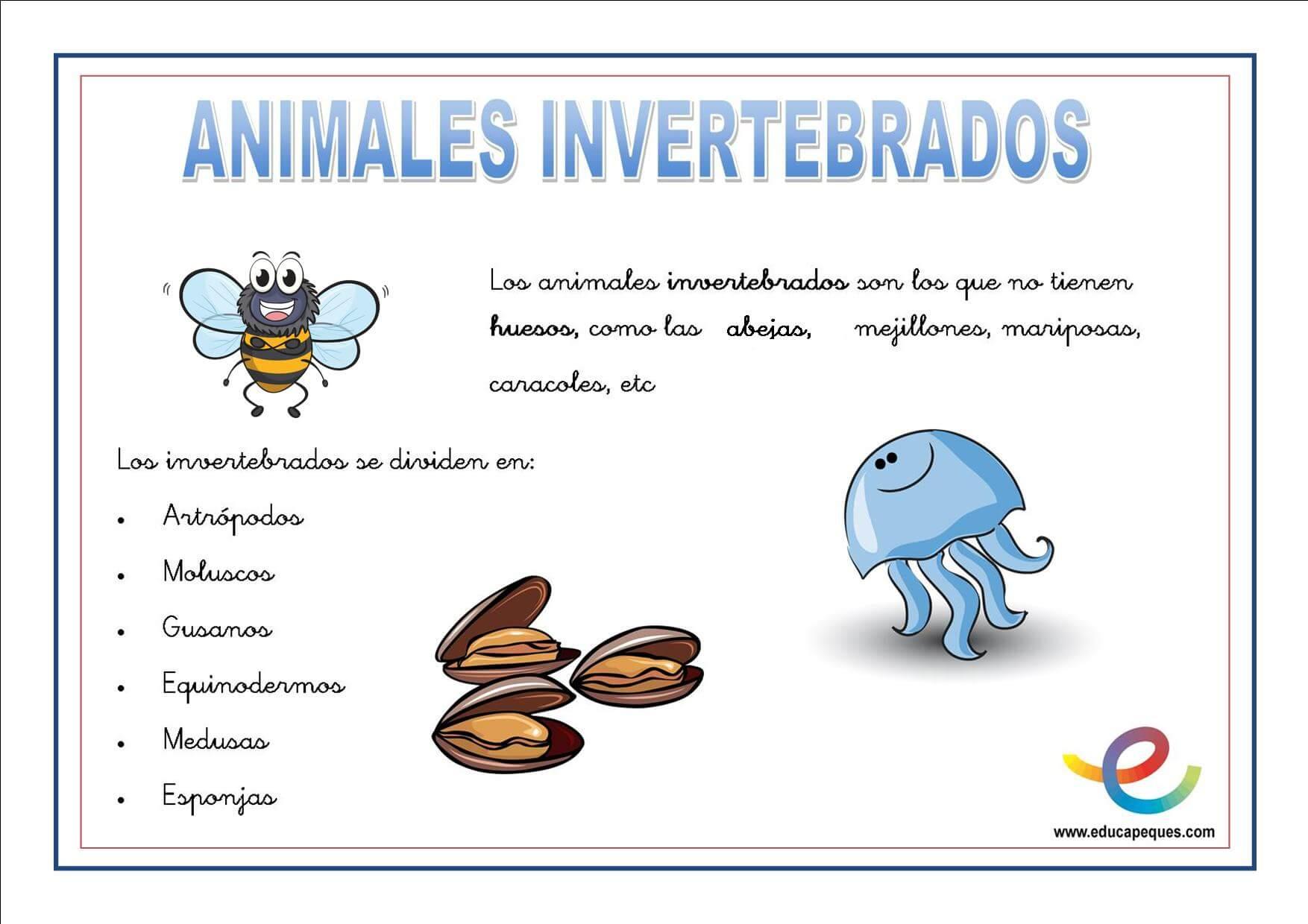 Resultado de imagen de invertebrados para niños
