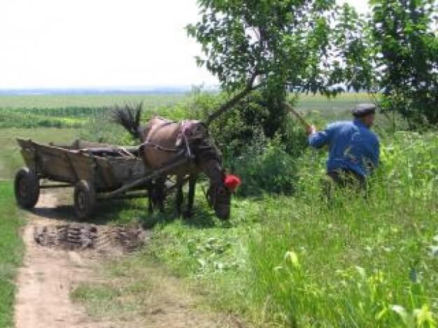 campesinos-en-el-campo_19-101689