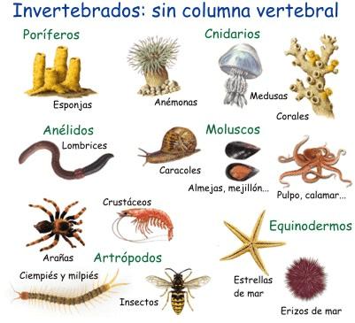 Invertebrados Animales Sin Columna Vertebral La Misión Azul