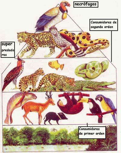Animales Carnívoros Animales Consumidores De Carne