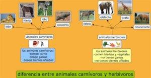 diferencias entre animales carnívoros y hervívoros