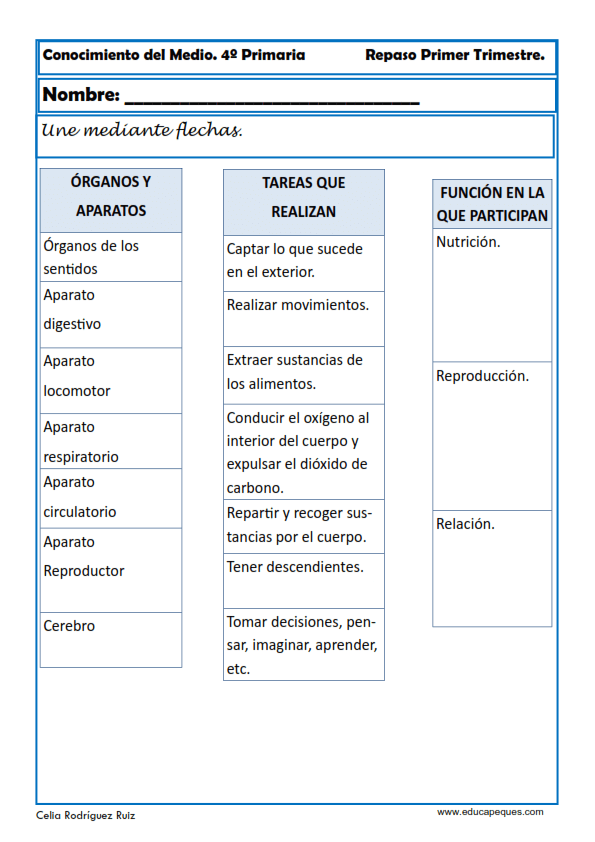 Fichas conocimiento del medio cuarto de primaria for Cuarto primaria