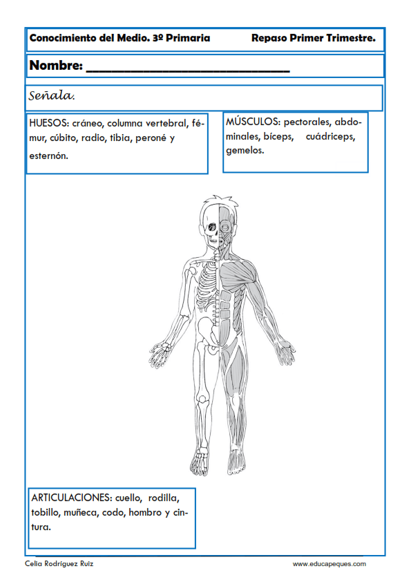 Atractivo Anatomía Para Colorear Páginas Huesos Fotos - Dibujos Para ...