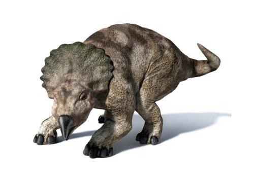 imagenes dinosaurios parte 2_028