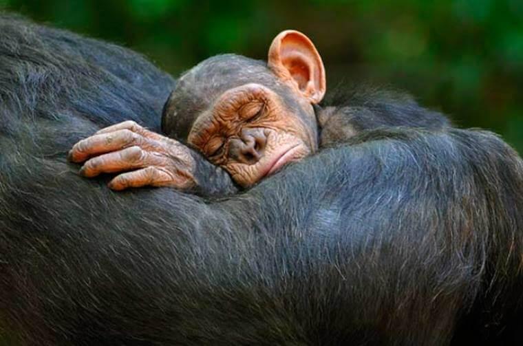 solidaridad en los animales