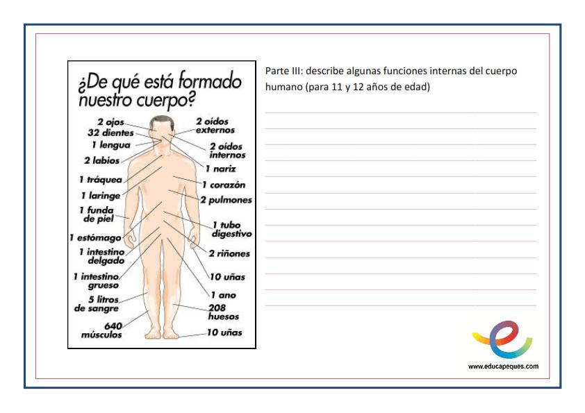 Fichas Para Reconocer Las Partes Del Cuerpo Humano