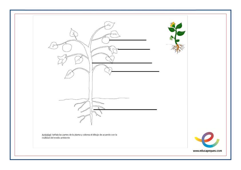 Que Son Las Plantas Partes Y Funciones De Las Plantas