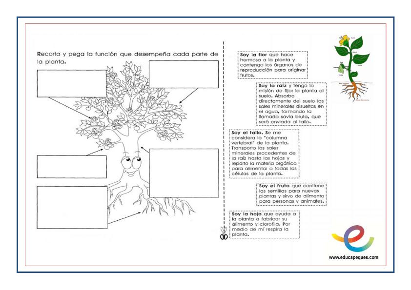 Partes y función de las plantas 4