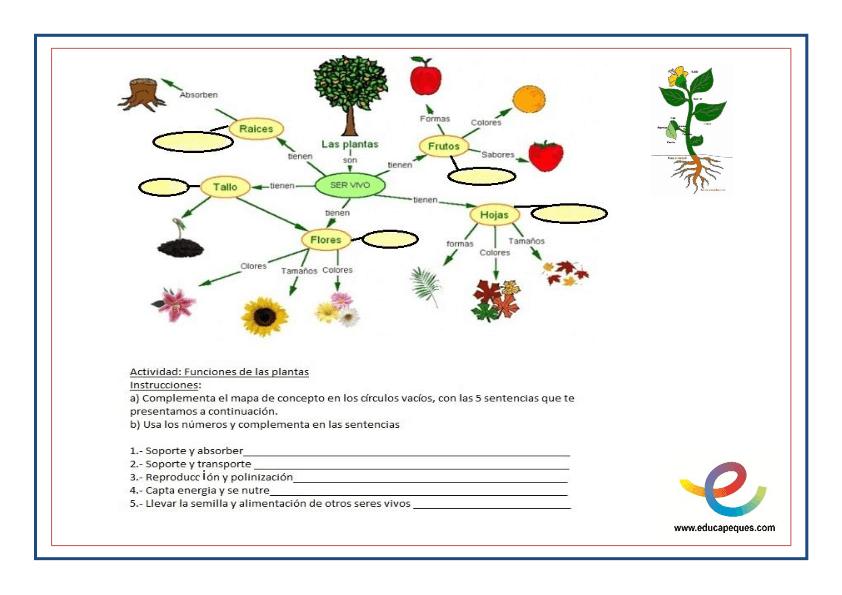 Partes y función de las plantas 5