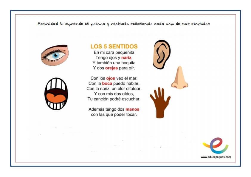Aprendiendo Los Cinco Sentidos Del Cuerpo Humano