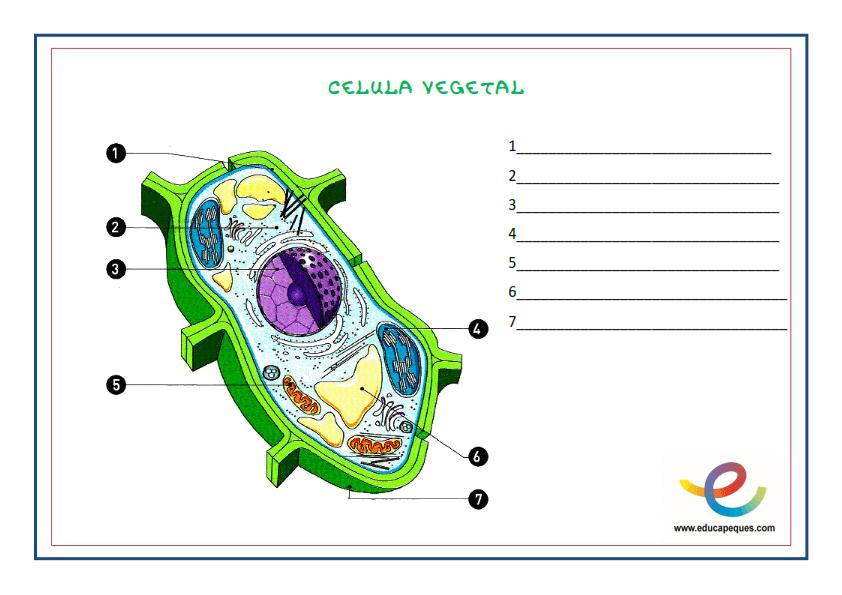 La célula. Guía básica para aprender y repasar sobre las células