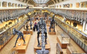 Museo dinosaurios Paris