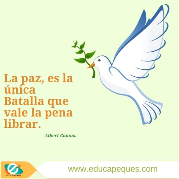 Paz 3