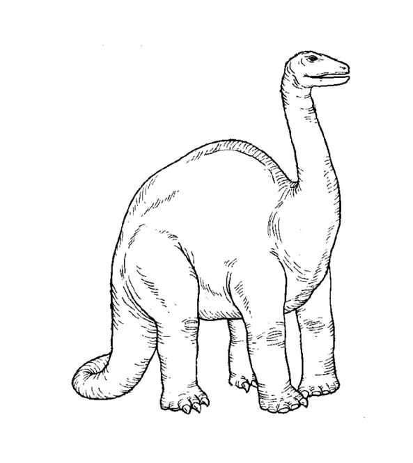 apatosaurio para colorear