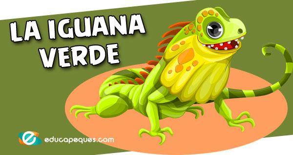 iguana verde, iguana común