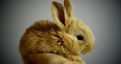 Los conejos enanos, unas mascotas excelentes para los niños