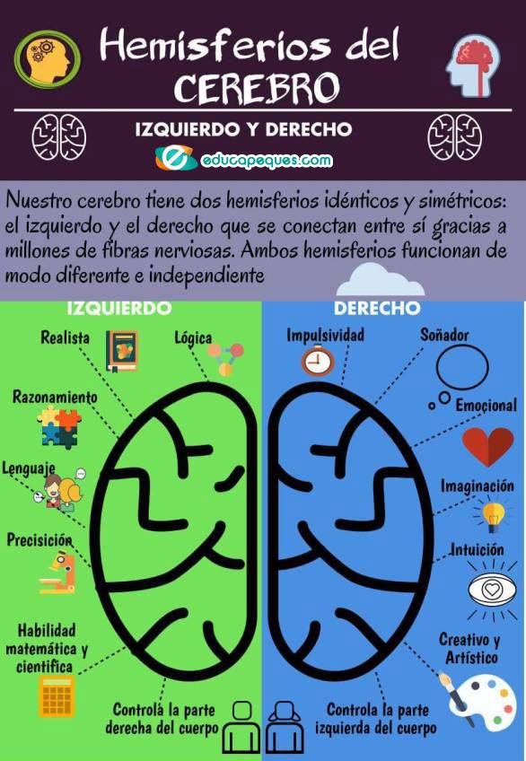 infografía hemisferios cerebrales