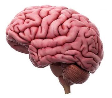 El cerebro y las emociones