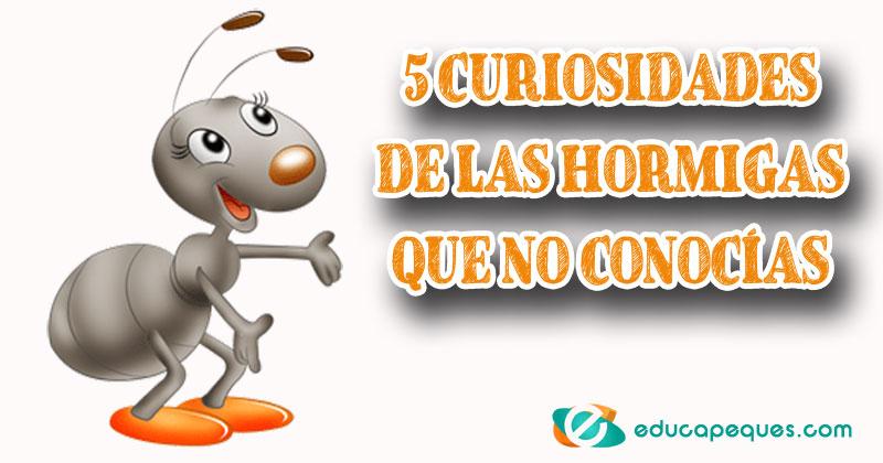 curiosidades de las hormigas