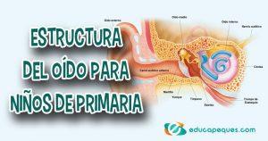 estructura del oído, partes del oído
