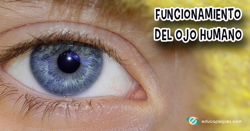 como funciona el ojo humano