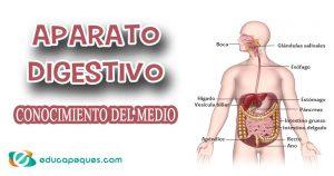 aparato digestivo, sistema digestivo
