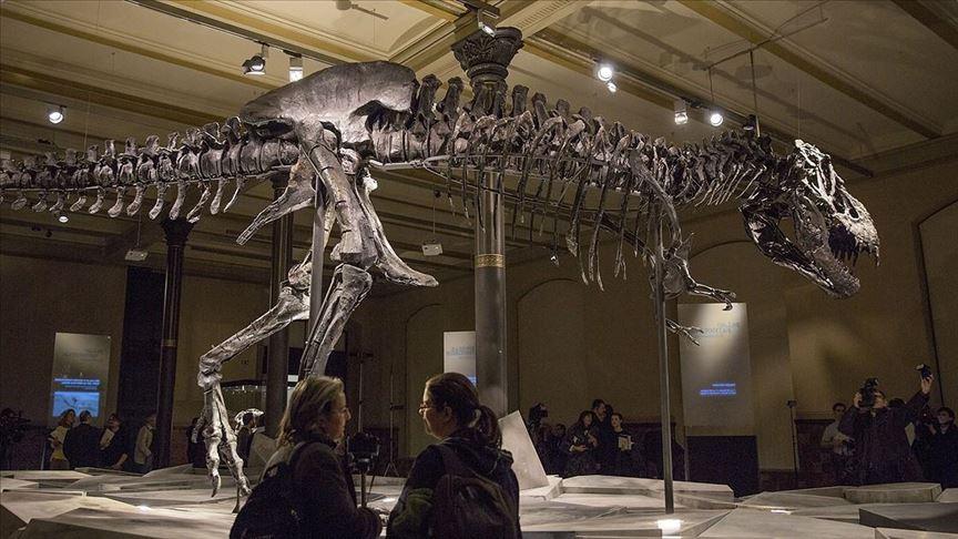 Los fósiles de los Tyrannosaurus Rex