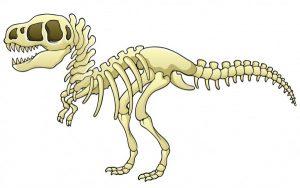 Fósiles del Tyrannosaurus Rex