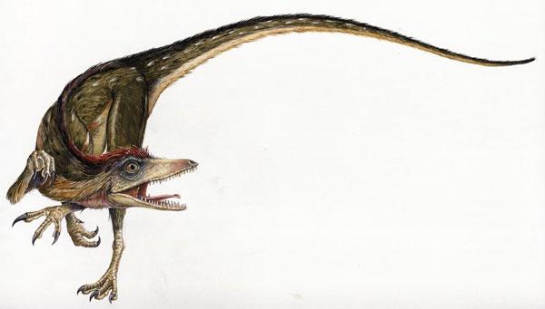 Dinosaurios con plumas - Sinosauropteryx prima