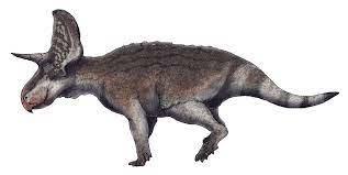 Dinosaurios con cuernos en la cabeza: Turanoceratops