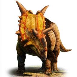Dinosaurios con cuernos en la cabeza: Xenoceratops