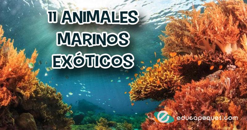 Asombrosos animales marinos exóticos