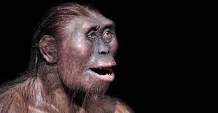 Homínido del género australopithecus