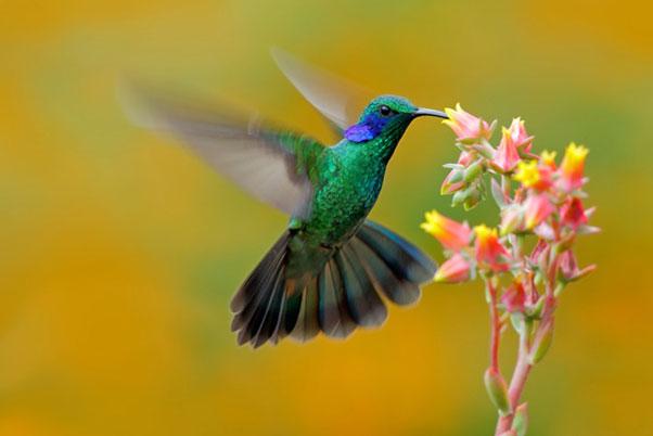 colibrí para niños